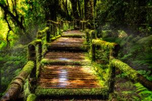 Rainforrest Walk