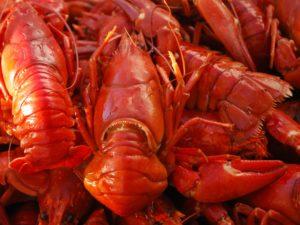 crayfish-472815