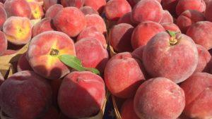 peach-1405605