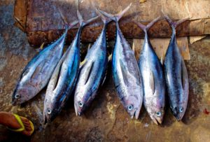 tuna-fish-954073
