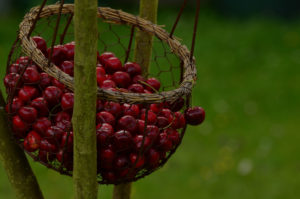 berries_darker_35