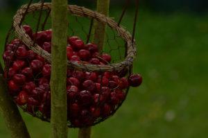 berries_darker_45